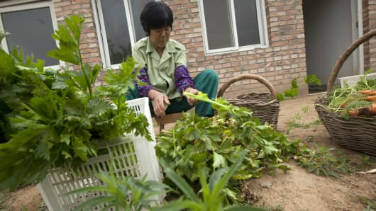An employee works with produce at a farm that practices organic farming techniques in Beijing.