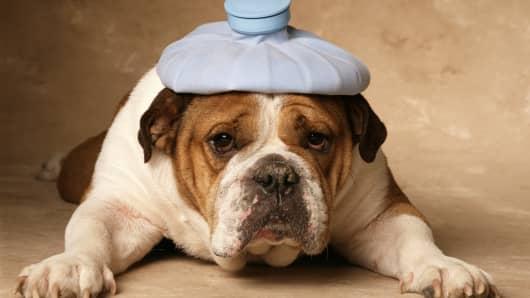 Dog with headache