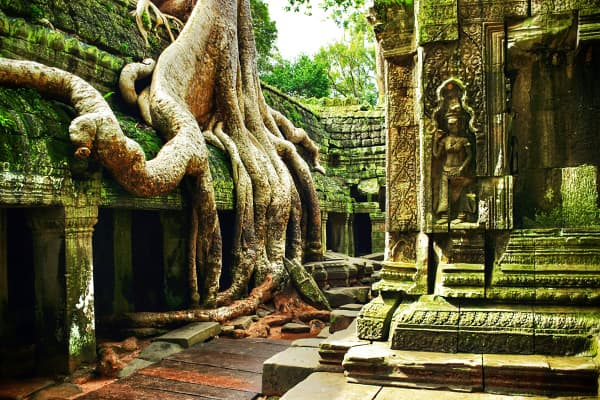 Ta Prohm, a Buddhist temple in the heart of the jungle in Angkor Wat, Cambodia, is a popular tourist destination.