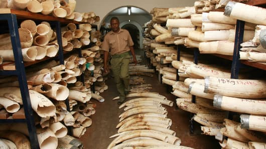 A Zimbabwe National Parks worker walks in the room where elephant tusks and rhino horns are kept in Harare.
