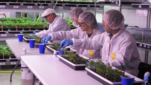 A Privateer Holdings marijuana facility