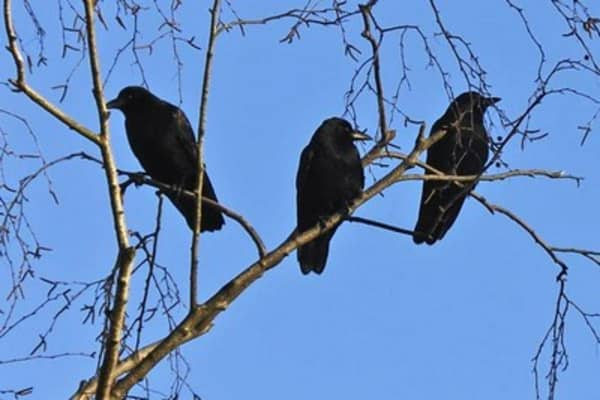 Three black crows could spell doom for the market