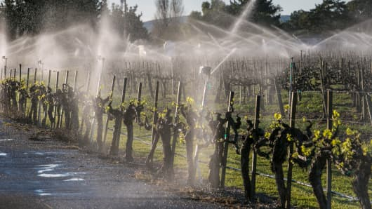 A winery's vineyard irrigation system provides moisture to grapevines on March 17, 2015, near Los Alamos, California.