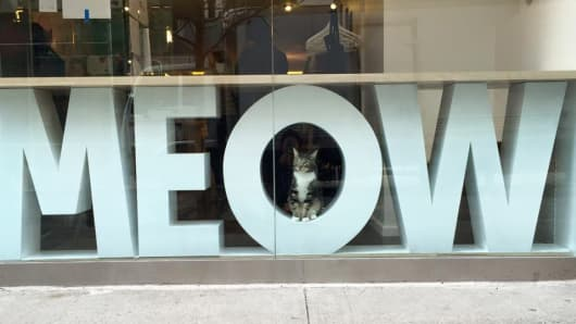 Window of the Meow Parlour