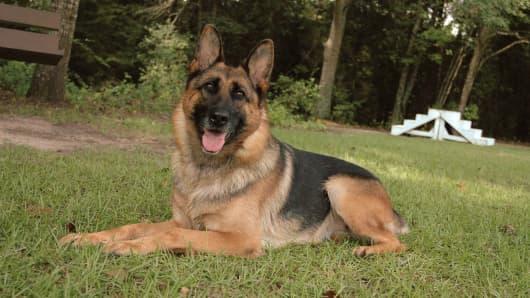 Julia, a Harrison K-9 dog that sold for $230,000