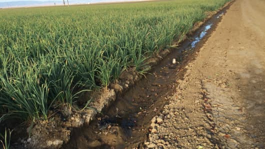 Mark Borba farms 9,000 acres in the Central Valley including garlic and almonds.