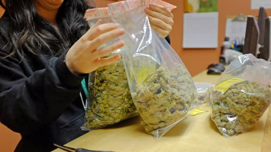 A dispensary worker handling bags of marijuana.