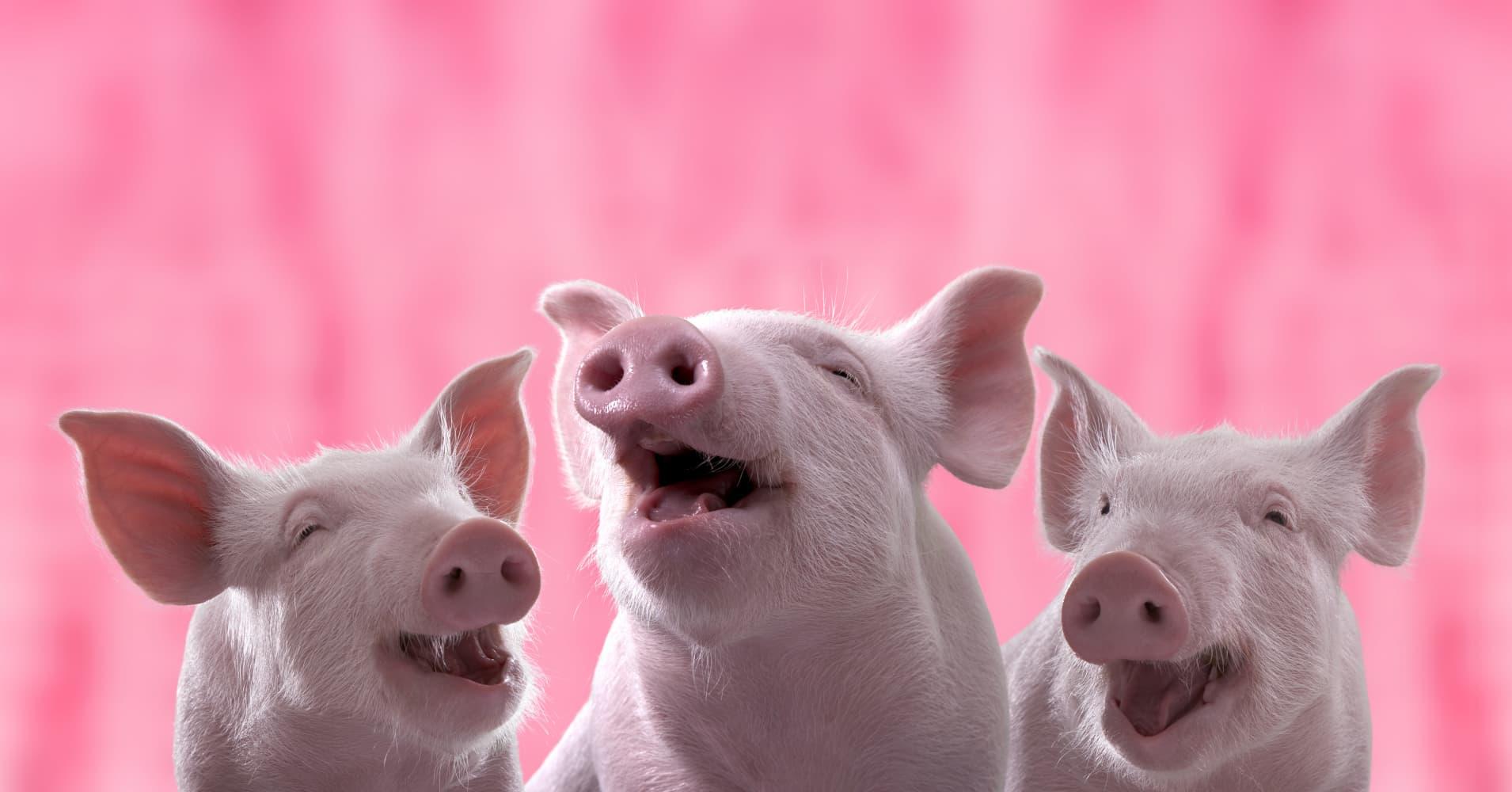 Резултат с изображение за pigs