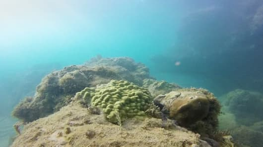 Small mound coral near St. Martin in the Caribbean.