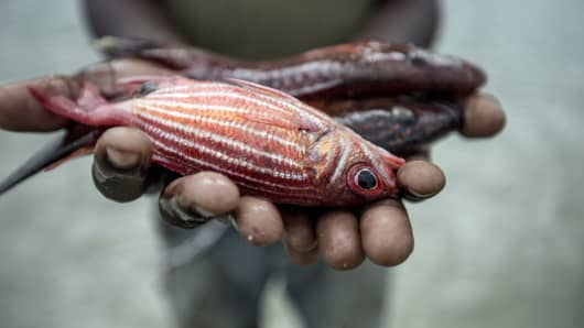 Fisherman holding fish in his hands, Mafamede, Mozambique.