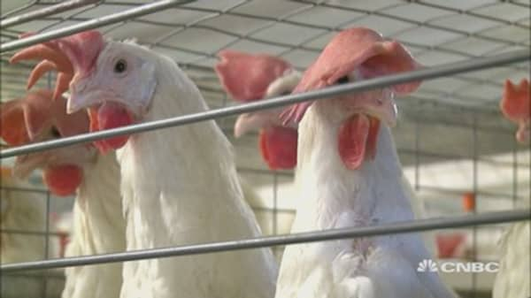 Bird flu found at 5 new sites in Iowa