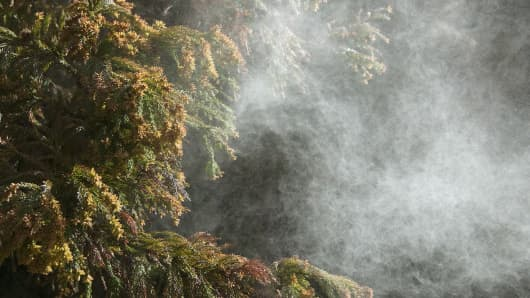 Cloud of tree pollen