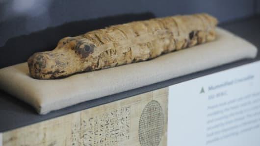 A mummified crocodile from 332-30 B.C.
