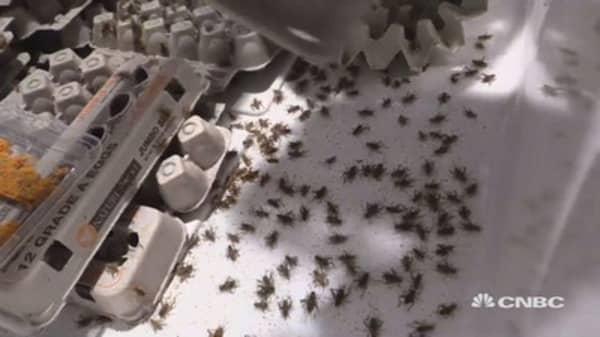 Cricket Farming Startup