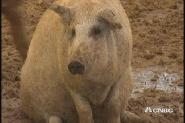 Wall Street big wig sells pigs
