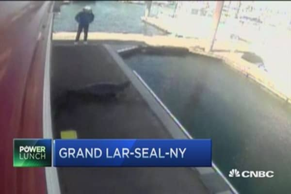 So a seal enters a fish market ...