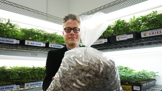 Andrew DeAngelo, a cannabis entrepreneur based in Oakland, Calif., handles nearly $9,000 worth of medicinal marijuana.