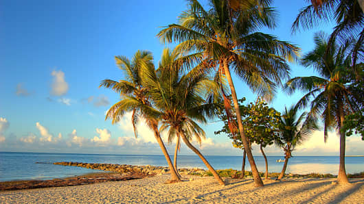 Florida beach with palm trees