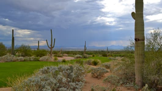 Turfgrass on a golf course just outside Tucson, Arizona.