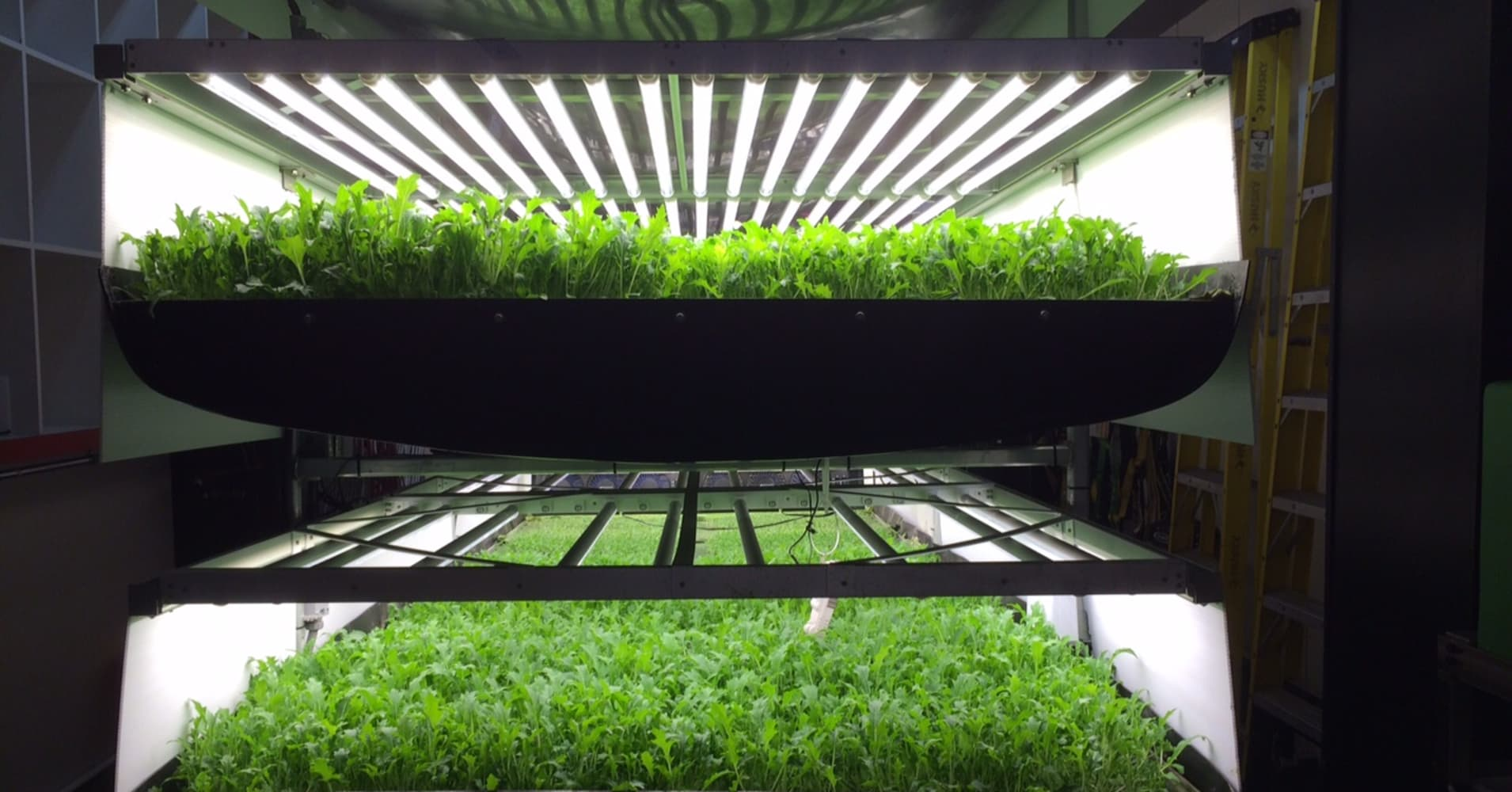 Vertical farming: The next big thing for food—and tech