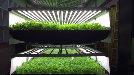 Vertical farming at AeroFarms.