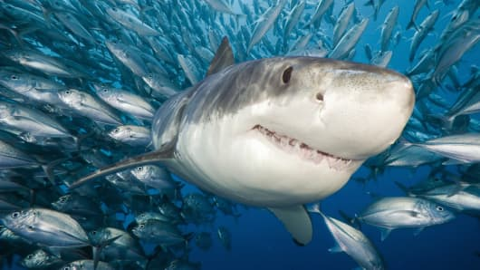 Moving To Mexico >> 7-foot great white shark saved by beach-goers