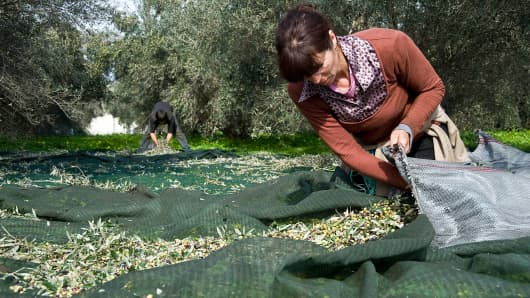 Workers during olive harvest one step before oil mill in Heraklion, Greece.