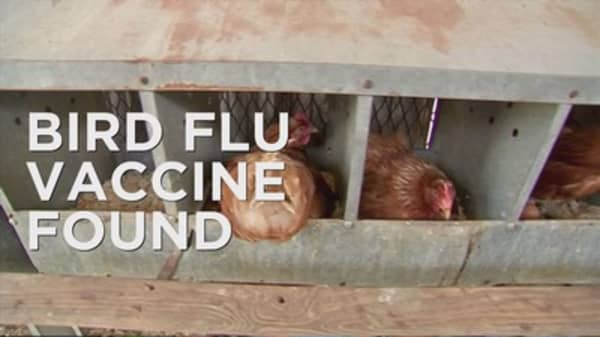 Bird flu may soon fly the coop