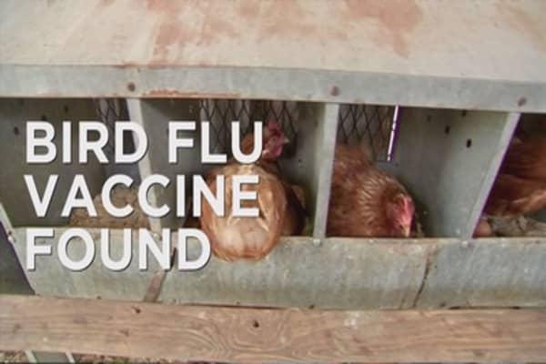 Bird flu may soon fly the coop