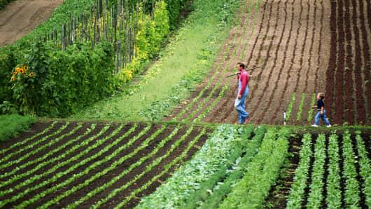 A farmer and his son on an organic vegetable farm in Whatcom County, Washington.