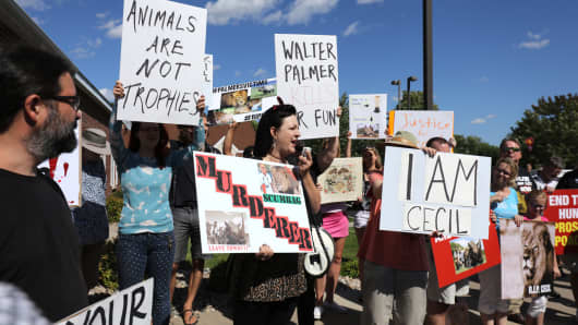 Rachel Augusta leads the protest of the killing of Cecil the lion in the parking lot of hunter Dr. Walter Palmer's River Bluff Dental Clinic on July 29, 2015 in Bloomington, Minnesota.