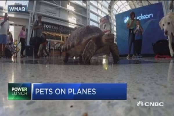 Traveling with your emotional support animal