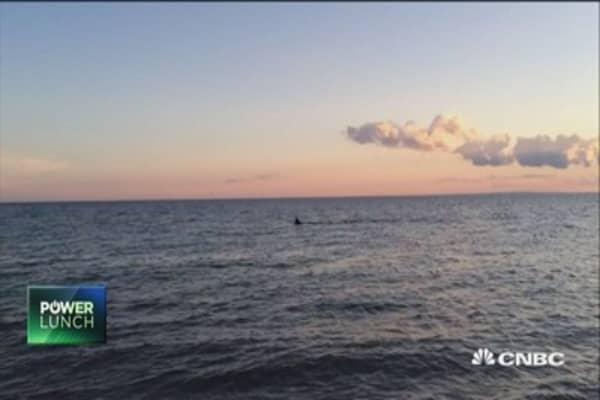 Shark prowls near Cape Cod