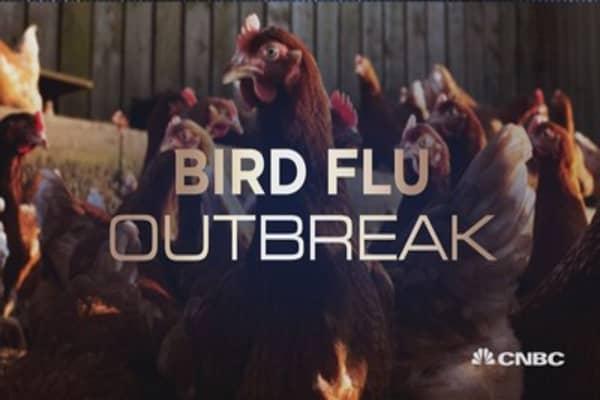 Bird flu: Fowl play