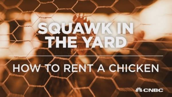 Did you know you can rent chickens?