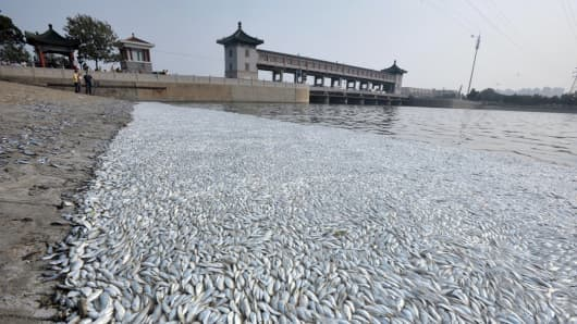 Dead fish float along the shore of Haihe River Dam on August 20, 2015 in Tianjin, China.