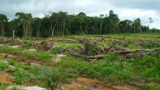 Deforestation in Liberia
