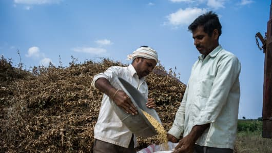 Farmers pack separated soybeans in their field in the district of Burhanpur, Madhya Pradesh, India.
