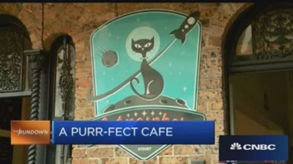 Here's a 'purr-fect' cafe in Sydney
