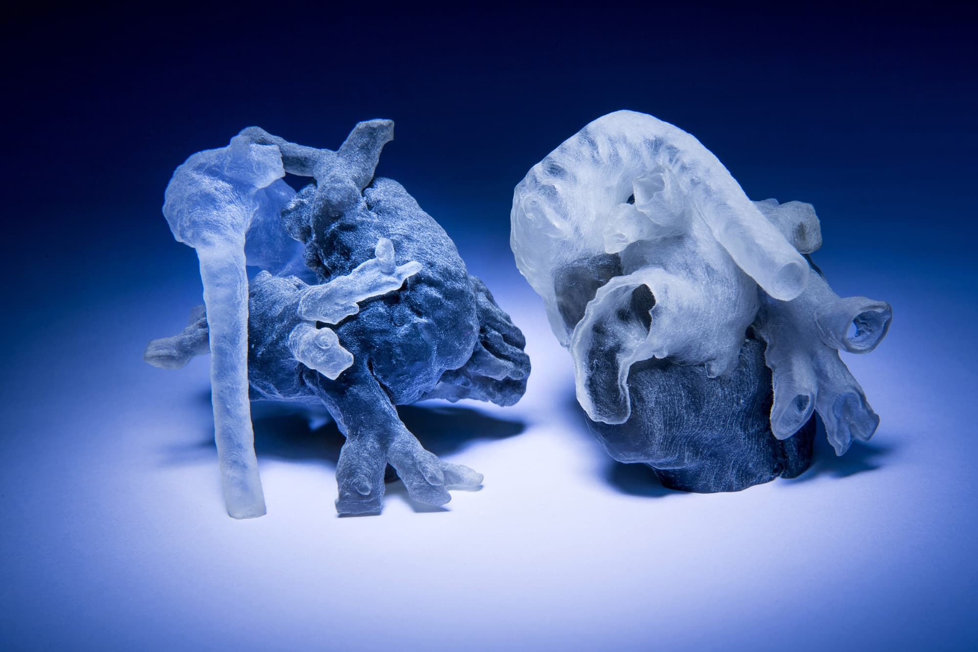 Image result for heart 3d printed model
