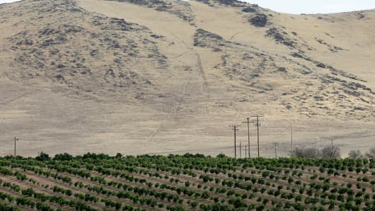 Citrus trees sit below a barren hillside in Tulare County in California's Central Valley. In year four of the drought, many farmers are getting only a fraction of their historic surface water supplies.