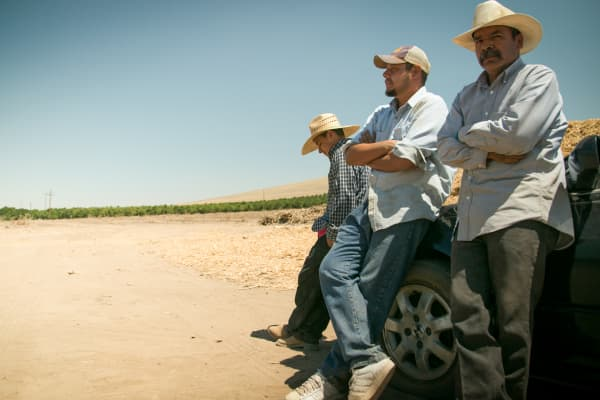 Workers Victor Diaz, Fernando Hernandez and Roman Moreno clear fallowed land in Tulare County. About 540,000 acres of California land will be fallowed in 2015, with most of that fallowed land in the Tulare Basin.