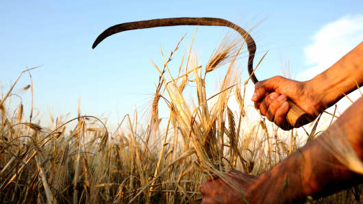 Harvest harvesting sickle