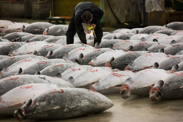 A wholesaler checks the quality of frozen tuna displayed at the Tsukiji fish market before the New Year's auction in Tokyo January 5, 2015.