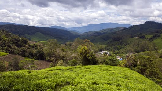 The view over the Boh tea estate in the Cameron Highlands, Malaysia.