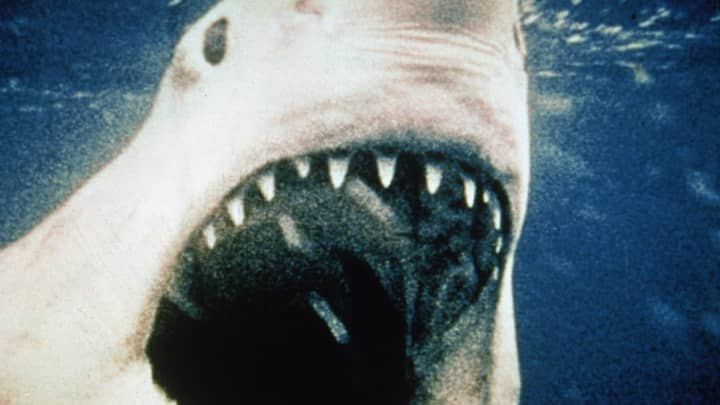 Great White shark opens its mouth in a still from the film, 'Jaws,' 1975.