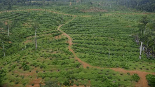 A picture shows an aerial view of oil palm fields of international agro-food company Olam, in Kango, central Gabon, on May 22, 2014