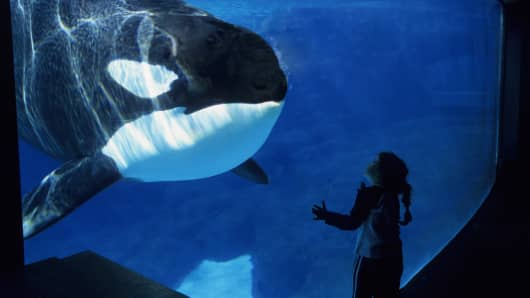 SeaWorld in San Diego, California.