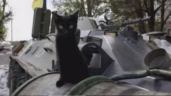 Cats bring Belgium relief
