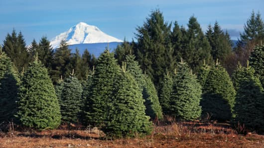 After years of oversupply, growers have drawn down tree inventories and tightened supplies.